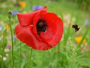 10 erstaunliche Fakten über Pflanzen & Bienen
