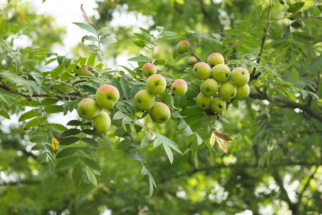 Apfelwein Rätsel
